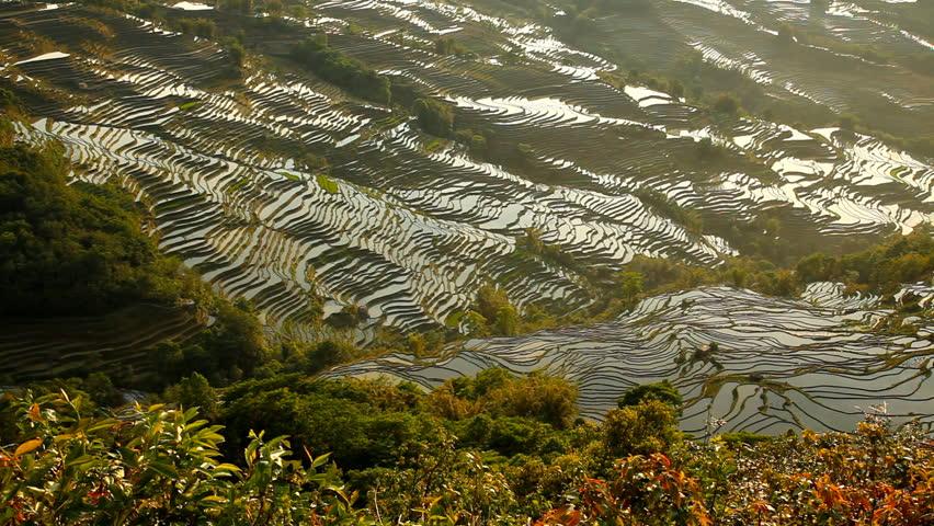 Rice Terraces. Yunnan, China - HD stock video clip