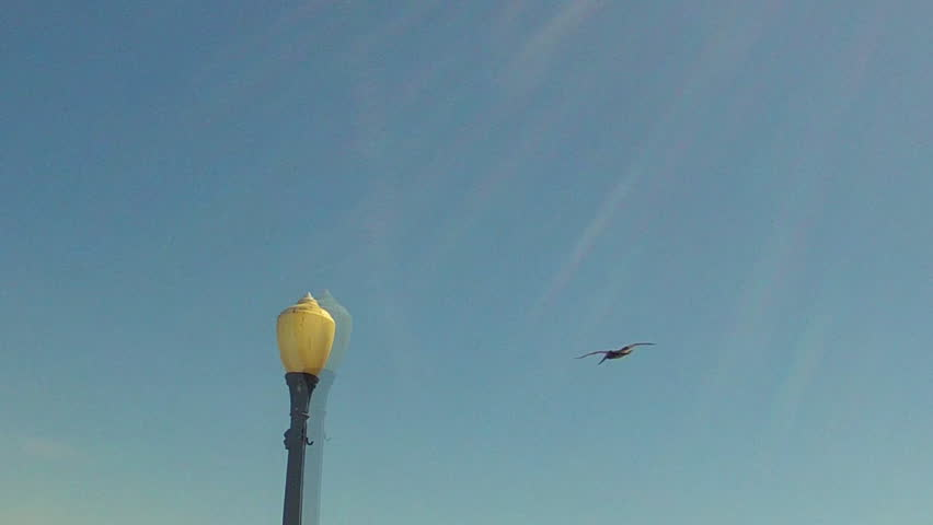 A beauty shot of a pelican flying upward, in slight slow motion and through sun