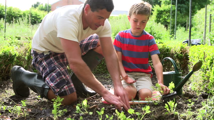 Father and son planting seedlings and watering them in backyard garden | Shutterstock HD Video #4875989