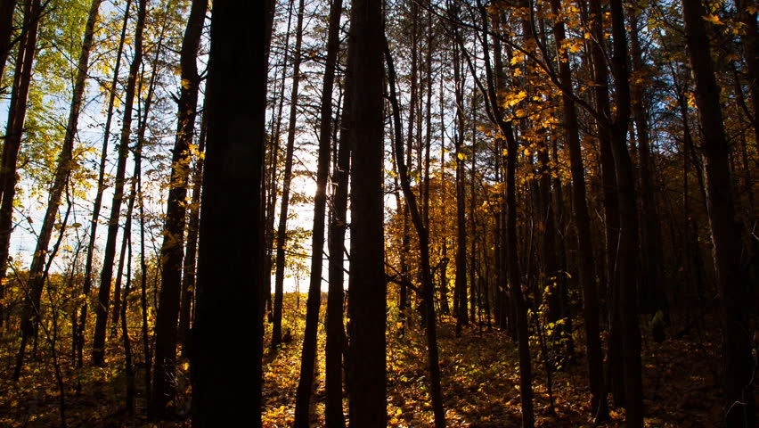 beautiful autumn forest with sun shining - dolly shot - HD stock video clip
