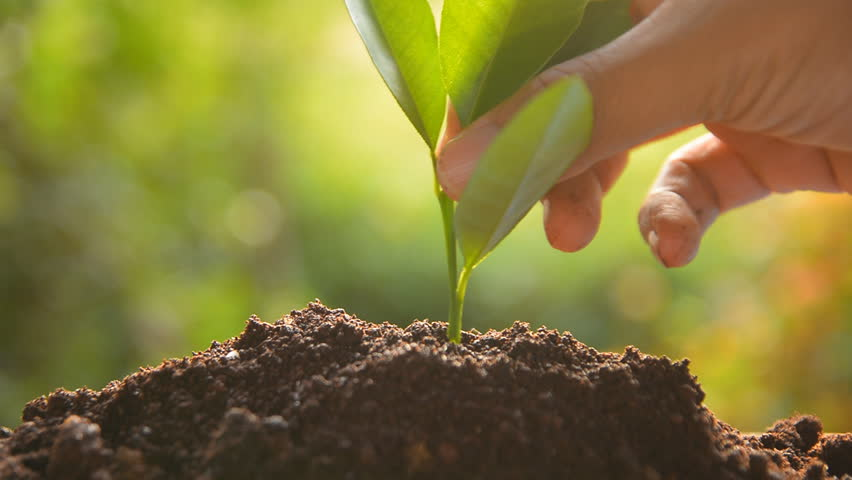 Planting tree sprout | Shutterstock HD Video #4955288