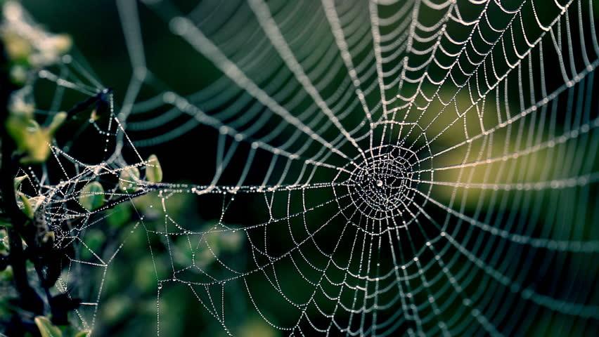 Spider's web in the garden. #4980983