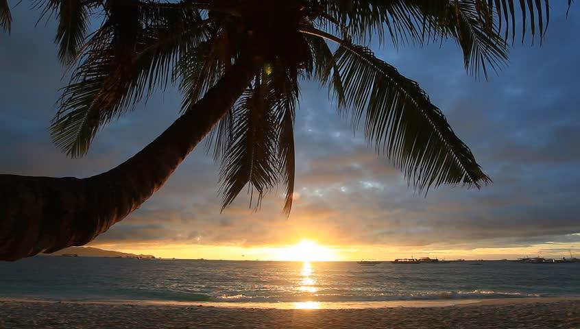 Palm on sunset