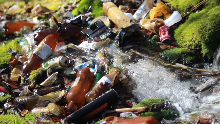 Essay On Unhygienic Junk Food
