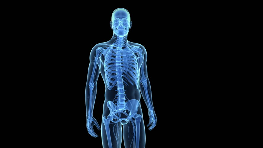 animation showing pain in the lower back - HD stock footage clip