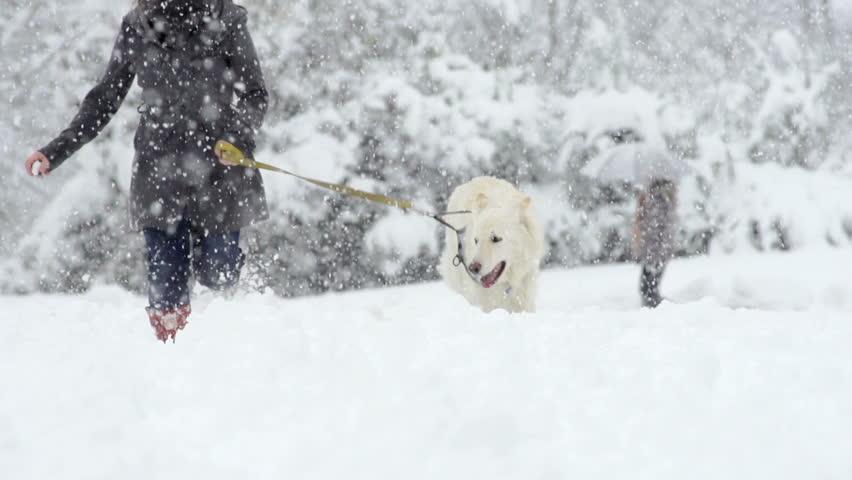 Spectacular Slow Motion Of White Swiss Shepherd Dog Running Through High Snow