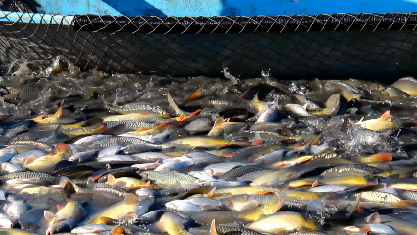 Fish pond stock footage video shutterstock for Fish nets near me