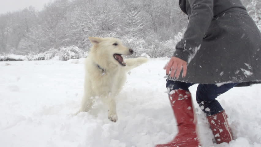 Slow Motion Of White Swiss Shepherd Dog And Young Woman Playing In Snow Covered