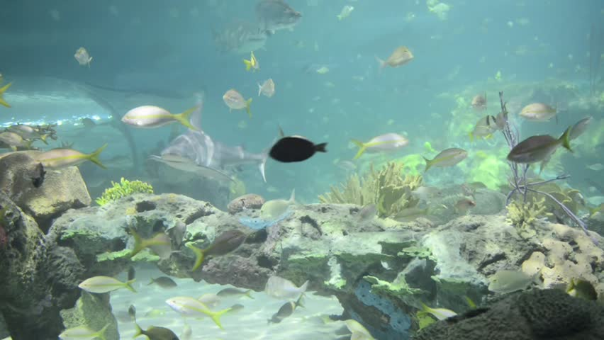 Beautiful Underwater Scenes Of Fish And The Coral Reef ...