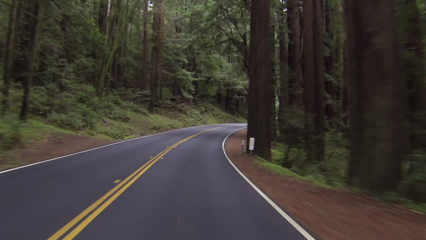 Driving through California redwood forest Point Of View right side road. Vacation travel in vehicles along scenic byway and roads. Redwood National and State parks with old growth trees. - HD stock footage clip