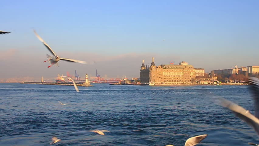 Close up of Seabirds. HQ 60 fps to Slow Motion. Flock of seagulls following the Istanbul ship at Kadikoy. 