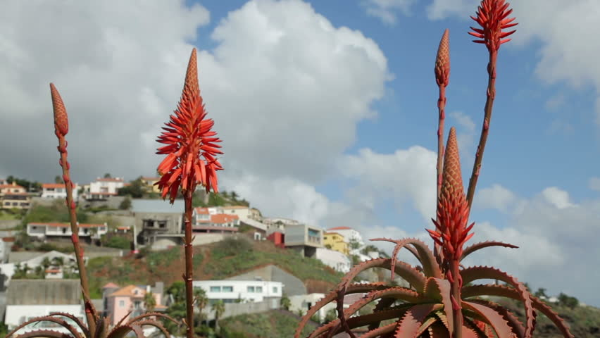 Header of Aloe barbadensis