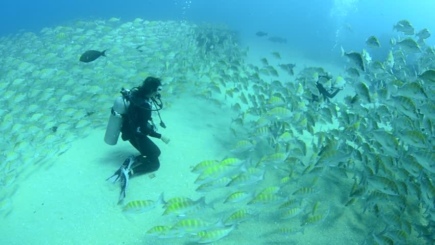 Schools of fish in shipwreck - HD stock video clip