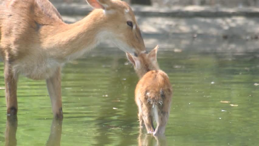 Header of maternal