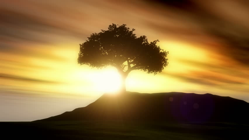 Solitary Silhouetted Tree Animation. An animated silhouetted tree and foreground with animated wispy clouds and a bright lens flare.