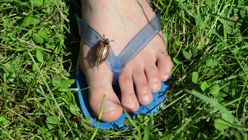 womans foot crawls one maybug antennas exploring around trying to spread the wings and flies