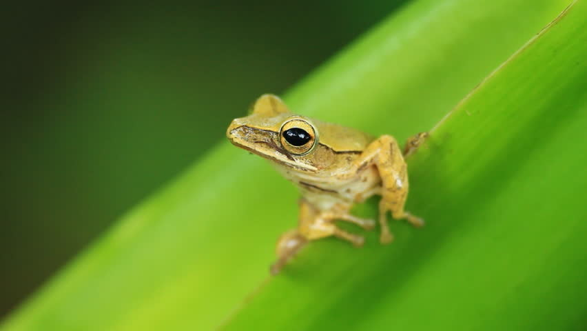 Frog on the tree | Shutterstock HD Video #5543024