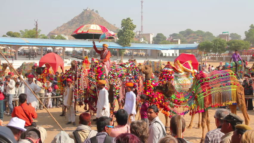PUSHKAR, INDIA - NOVEMBER 22, 2012: Competition to decorate camels at Pushkar camel fair - HD stock footage clip