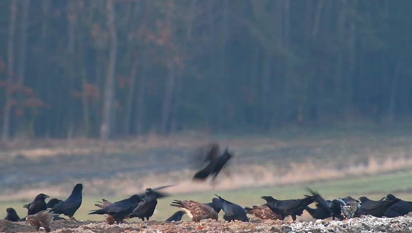 many birds in their natural habitat, nature series - HD stock footage clip