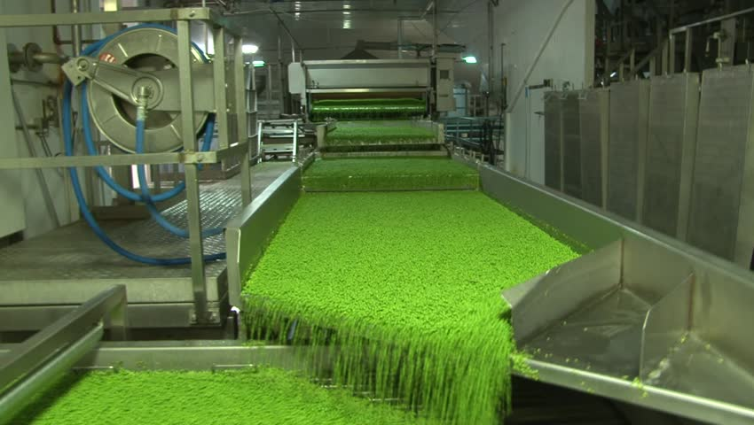 Fresh peas being frozen at food production facility - HD stock footage clip