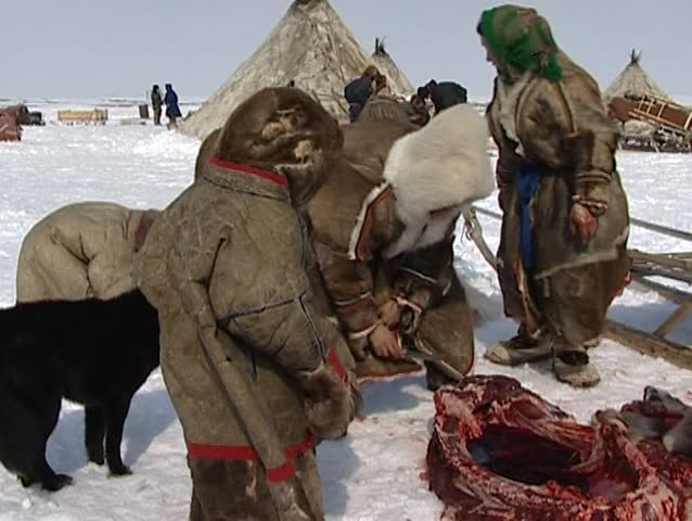 Yamal Peninsula, Russian Federation - Circa May 2004 - Nenet eating a raw reindeer