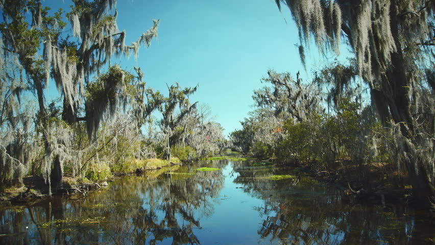 NEW ORLEANS - MARCH 10: going down the Bayou swamp river in a slow pace. - HD stock video clip
