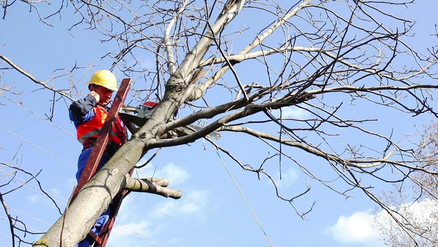 lumberjack on a ladder - HD stock footage clip