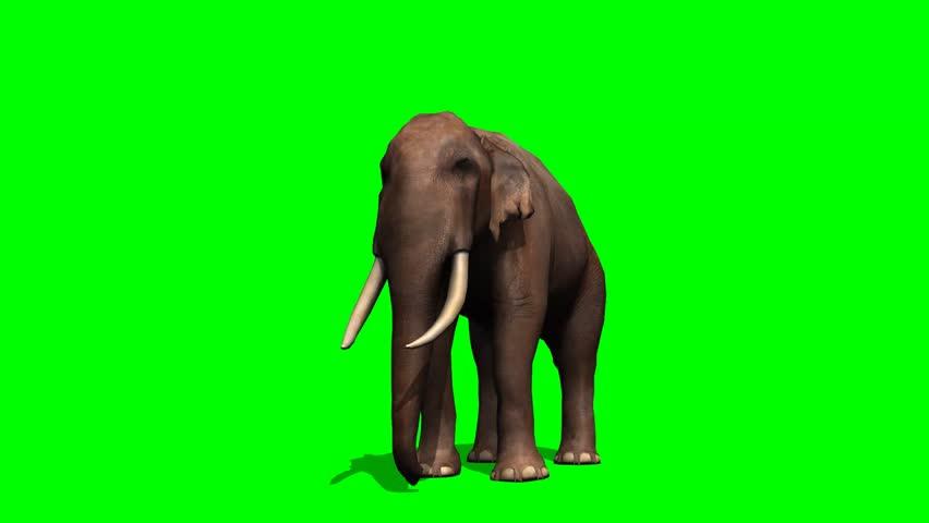 African Elephant in Motion - green screen   Shutterstock HD Video #5931545