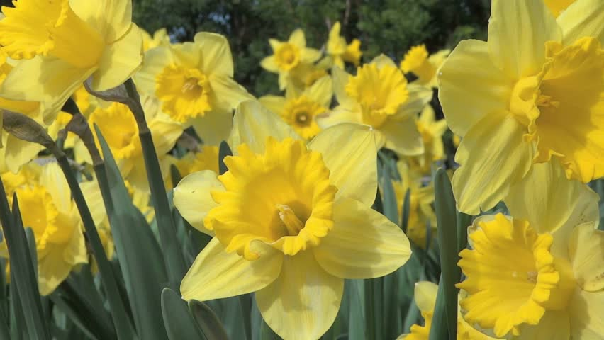 Sunny Spring Day Flowers