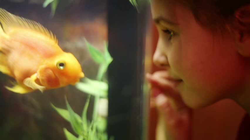 Girl looks at fish swimming in aquarium and presses her nose against glass - HD stock video clip