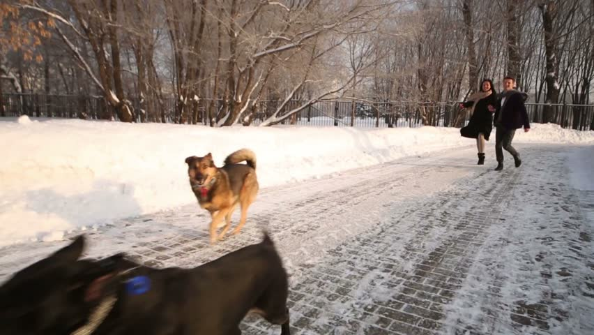 Happy woman and man run with two dogs in park at winter day | Shutterstock HD Video #6109808