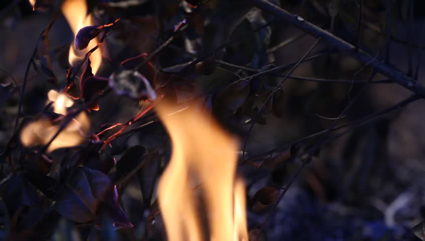 Fire Burns Inflames  - HD stock footage clip
