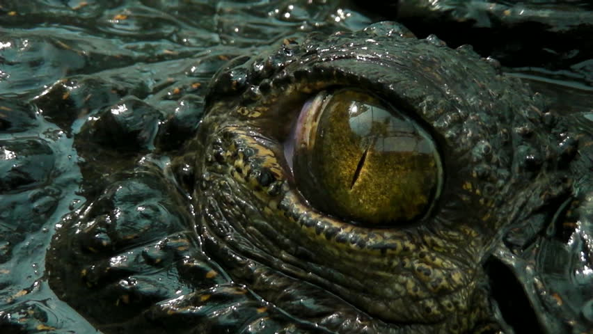 """the definition of the word croc Around that same time, lacoste was dubbed """"the crocodile"""" by his fans   originally licensed the lacoste name for izod, had a brilliant idea."""