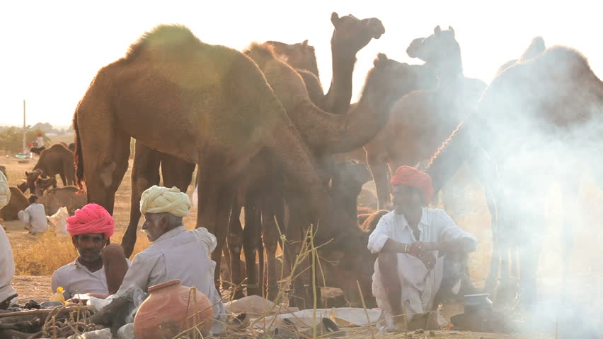 INDIA - DECEMBER 2012: Tribesmen cooking while at Camel Fair, Pushkar, Rajasthan, India - HD stock footage clip