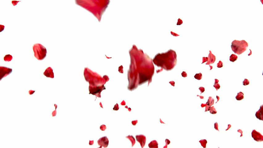 falling petals roses 3d animation on white and black background with alpha channel #6214874