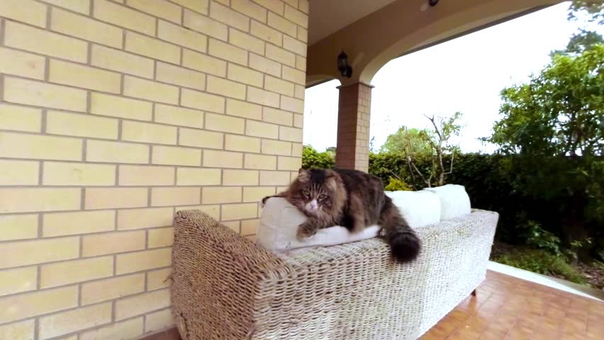 Slow motion footage of playful cat on top of a sofa.