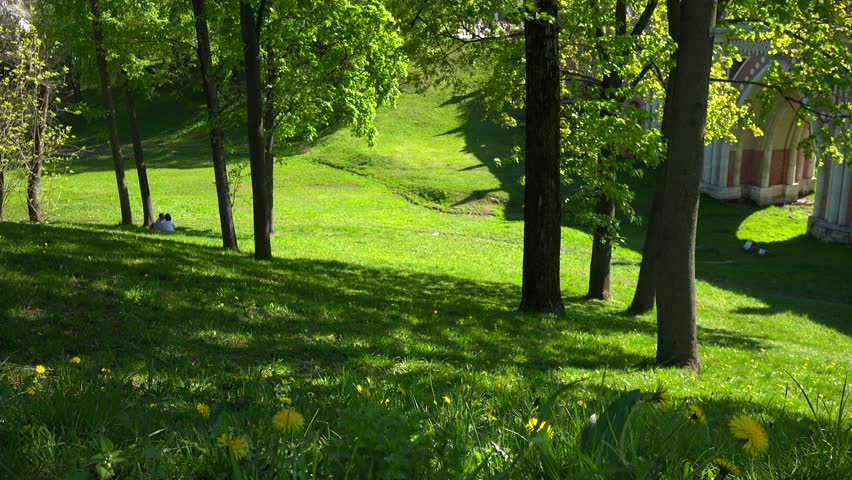 How to grow grass under oak trees : Growing plant under oak tree the last seconds loop mighty oaks