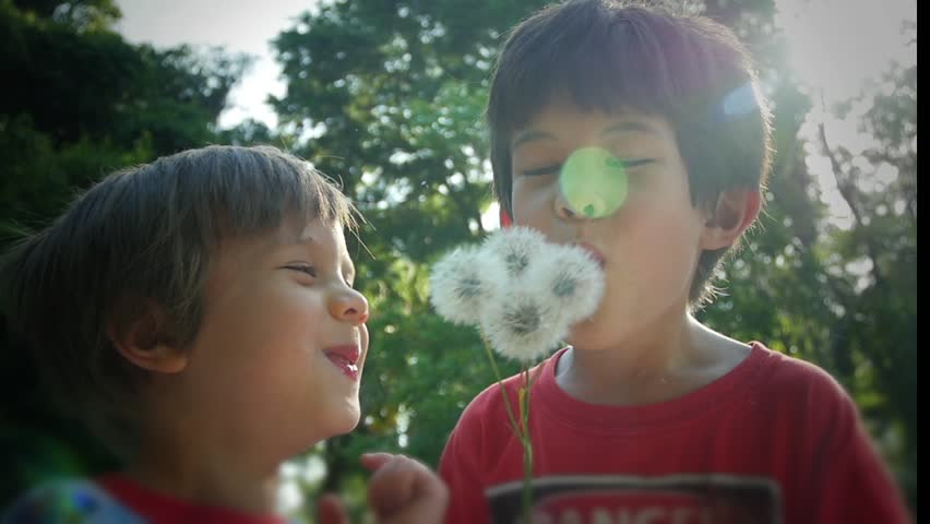 Two boys laughing being silly blowing dandelions, slow motion video clip - HD stock footage clip