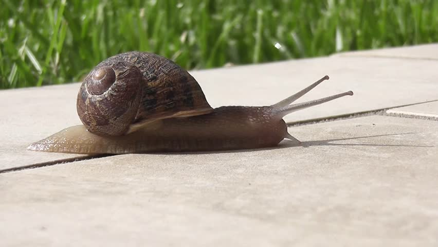 snail crawling over terrace - HD stock footage clip