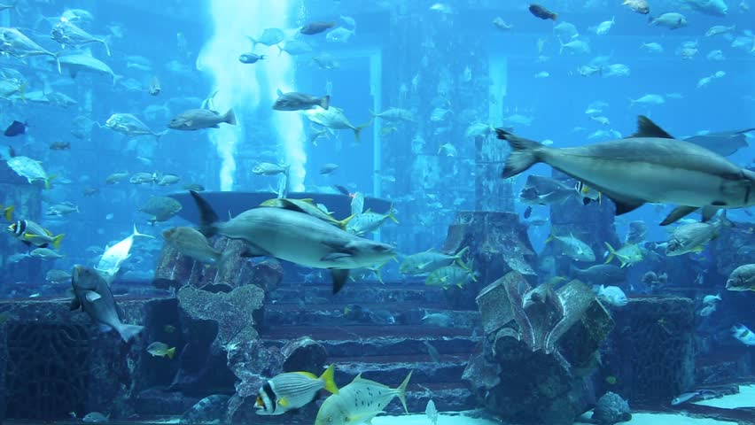 Photo of a tropical fish on a coral reef in dubai aquarium for Stingray fish tank