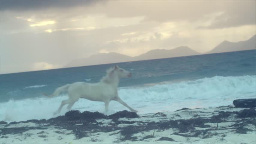 Horse running on beach 4