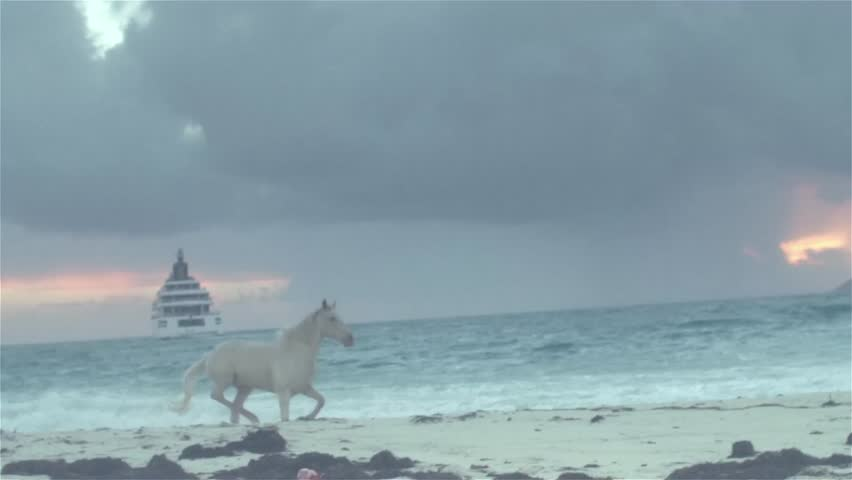 Horse running on beach  2