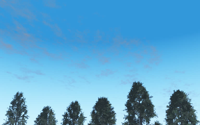 Evergreen Conifer trees and blue daytime sky with clouds moving over head. Easy editing and looping. Original Animation