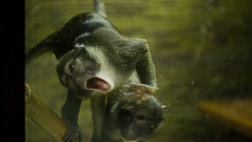 Monkey Zombie slow motion