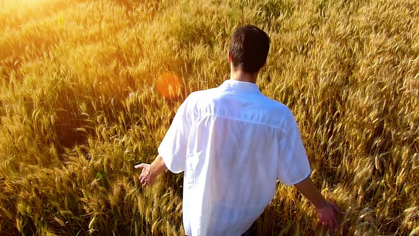 Rear view of satisfied young man walking across the wheat field
