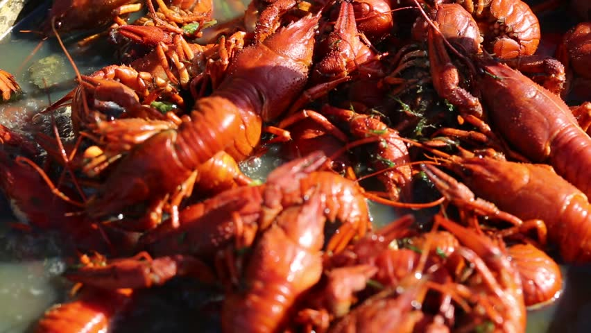 crayfish - HD stock footage clip