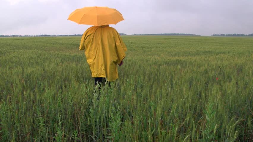 Farmer standing under an umbrella waiting for the rain in a wheat field #6632384