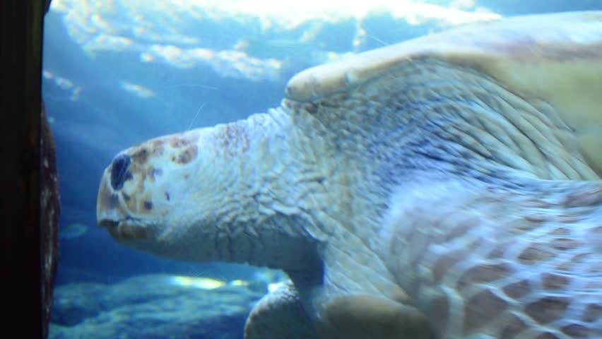 Large Turtle Swims Past Aquarium Glass Stock Footage Video 6690281 ...