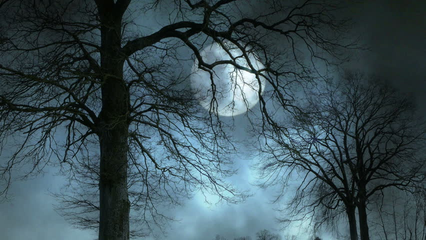 Image result for scary tree images