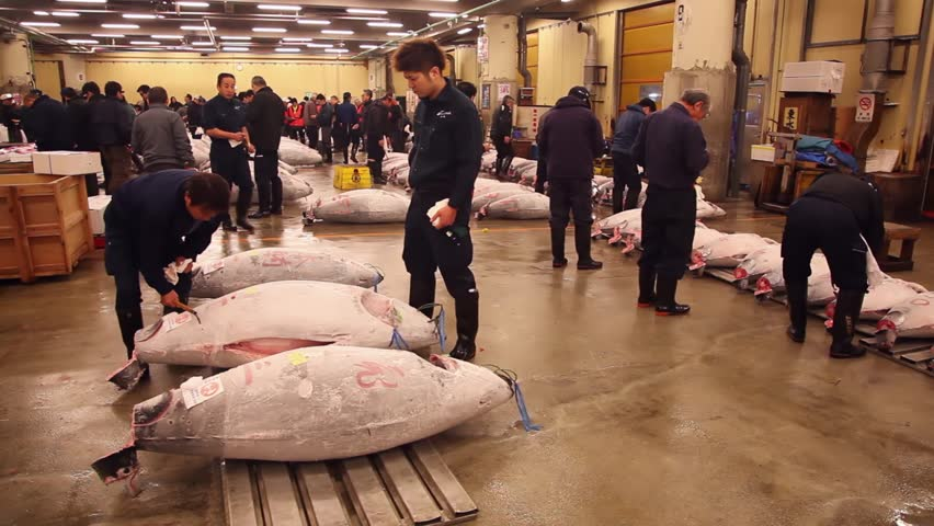 TOKYO, JAPAN - CIRCA APRIL 2014: People, men inspecting the frozen fish at the tuna auction. Tsukiji fish market, the largest wholesale seafood market in the world circa April 2014 in Tokyo, Japan - HD stock footage clip